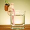 Samonawadniająca Roślinka Chuppon
