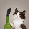 Stoper do wina Kotek