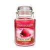 Raspberry Sorbet (Duży słoik)