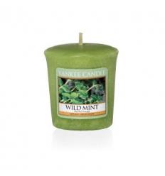 Wild Mint (Sampler)