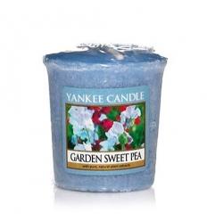 Garden Sweet Pea (Sampler)